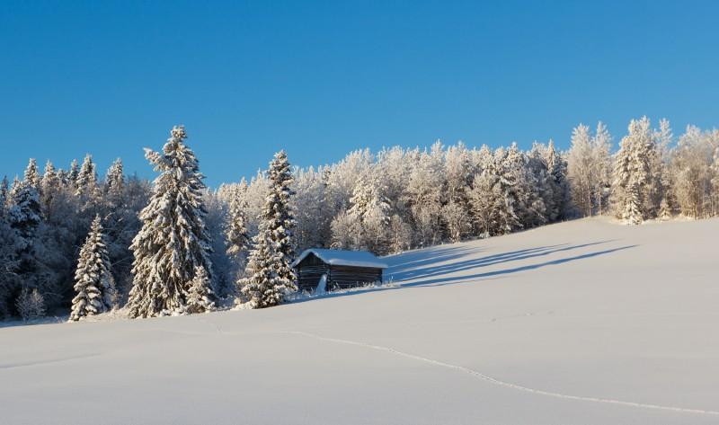 Talvemotiiv