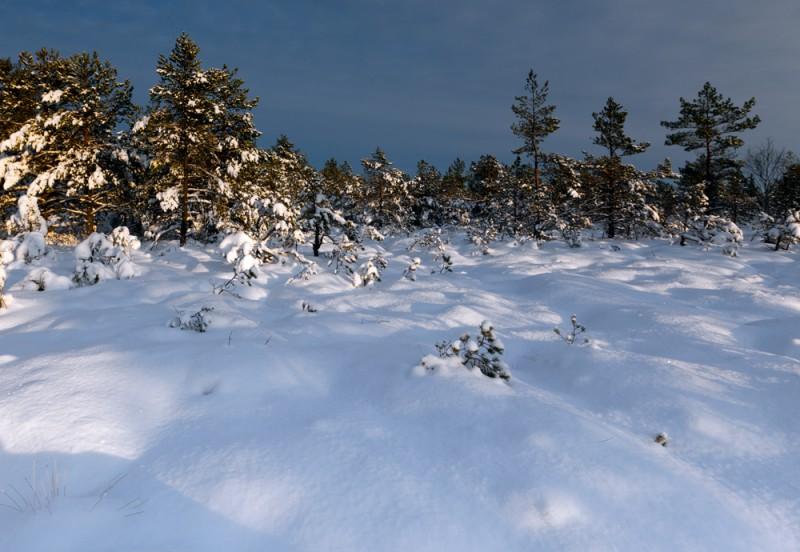 Talvine raba