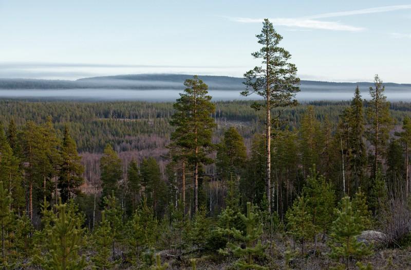Uduviirg metsa kohal