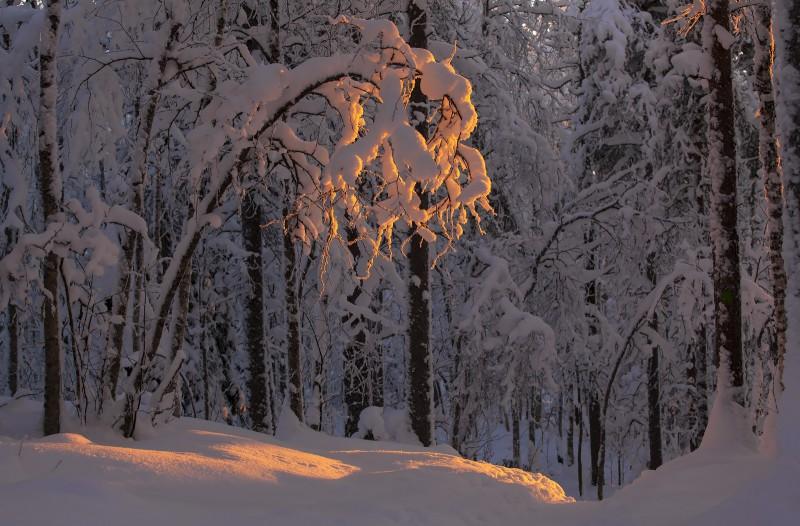 Valgus metsas