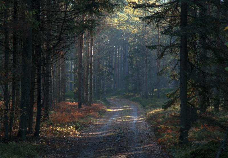 Metsatee Dirhamis
